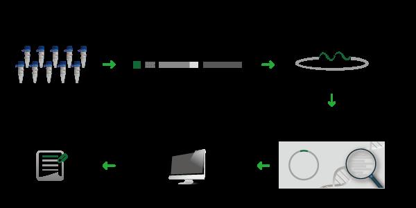 单克隆抗体测序流程