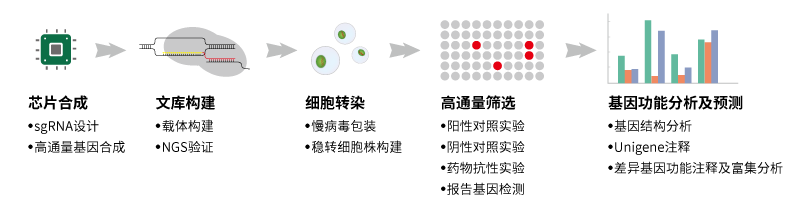 crispr-cas9 基因编辑平台一体化服务流程