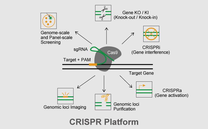 crispr基因编辑平台