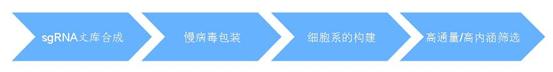 sgRNA文库构建与筛选服务流程