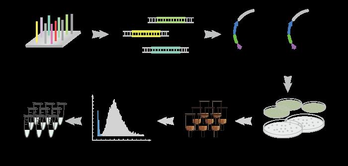CRISPR-Cas9 sgRNA文库合成技术路线图