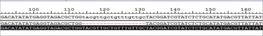 酵母基因组编辑