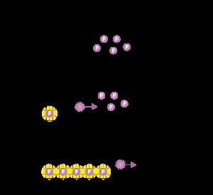 qPCR染料法