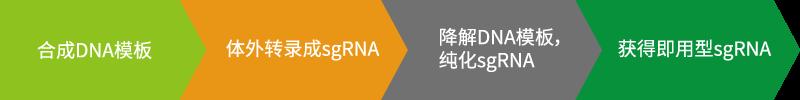 一步法合成gRNA DNA模板