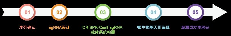 微生物基因组编辑