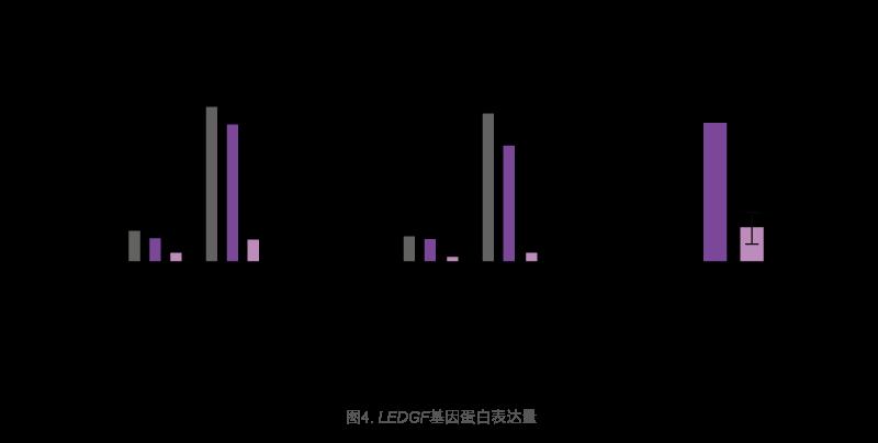 LEDGF基因蛋白表达量