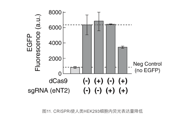 CRISPRi使人类HEK293细胞内荧光表达量降低