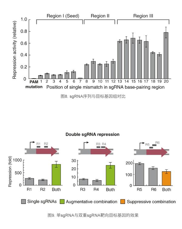 单sgRNA与双重sgRNA靶向目标基因的效果