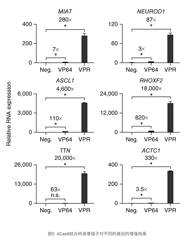 dCas9结合转录增强子对不同的基因的增强效果