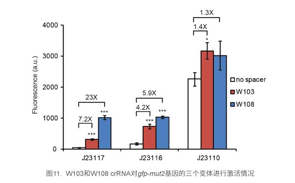 W103和W108 crRNA对gfp-mut2基因的三个变体进行激活情况