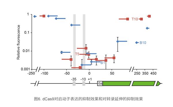 dCas9对启动子表达的抑制效果和对转录延伸的抑制效果