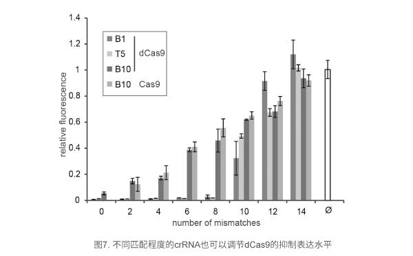 不同匹配程度的crRNA也可以调节dCas9的抑制表达水平