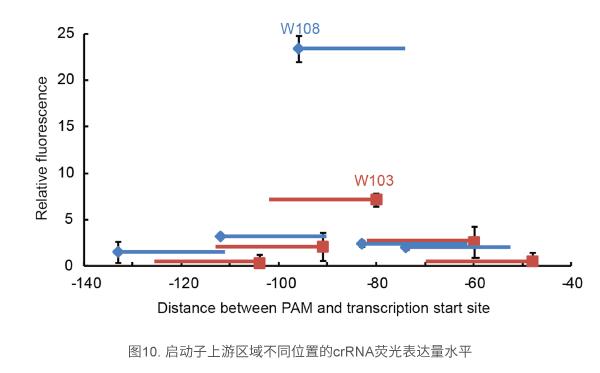 启动子上游区域不同位置的crRNA荧光表达量水平