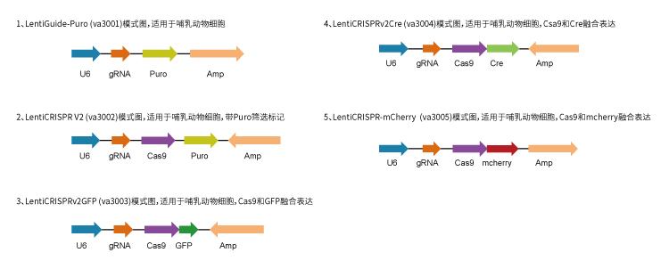 CRISPR-Cas9 Validated sgRNA
