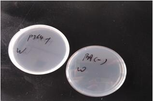 plasmid-preparation2