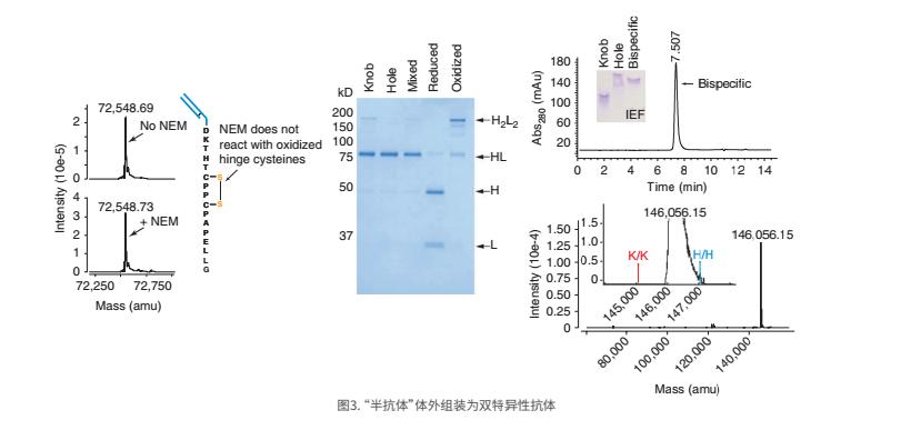 双特异性抗体1