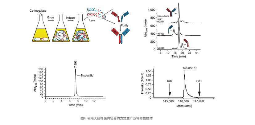 双特异性抗体 2