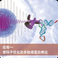 密码子优化和蛋白表达