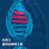 基因组编辑工具