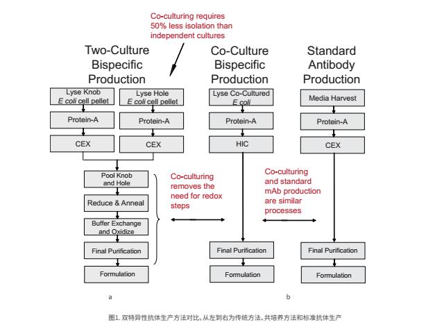 双特异性抗体生产方法对比
