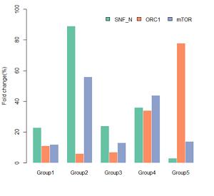 sgRNA的基因敲除效果评价