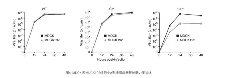 图4. MDCK 和MDCK192细胞中A型流感病毒复制动力学描述