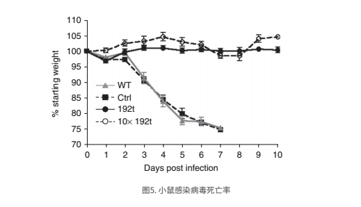 小鼠感染病毒死亡率