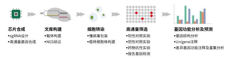sgrna-integrated-service-processes