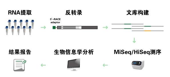 抗体测序服务标准流程