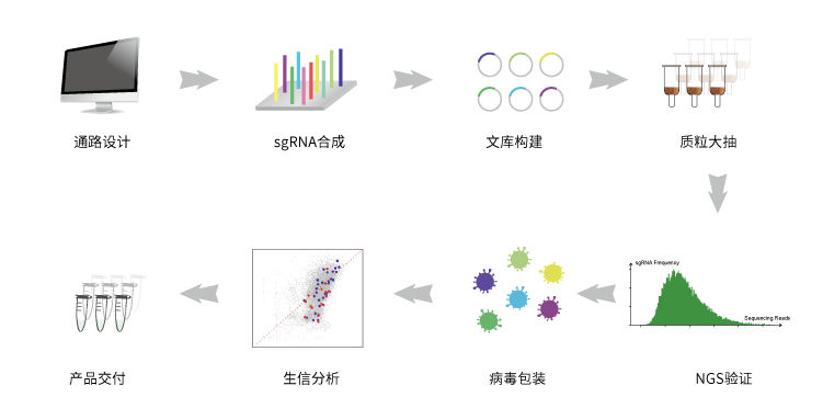 Pathway-Related CRISPR-Cas9 sgRNA文库合成