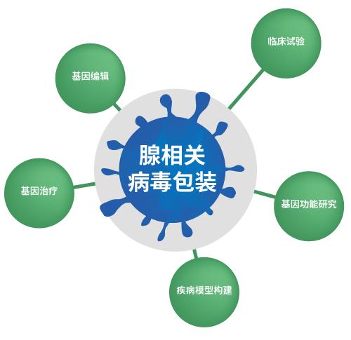 腺相关病毒包装应用方向