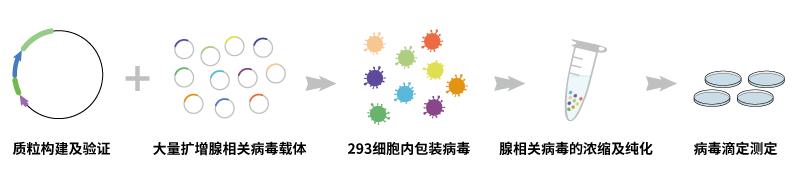 腺相关病毒包装服务流程