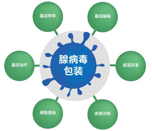 腺病毒包装应用方向