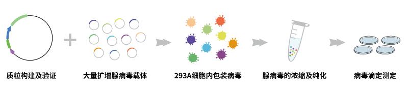 腺病毒包装服务流程