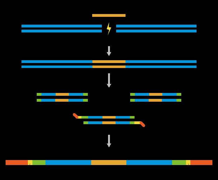 CRISPR/Cas9扩增子测序